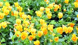 Flower02.JPGのサムネイル画像